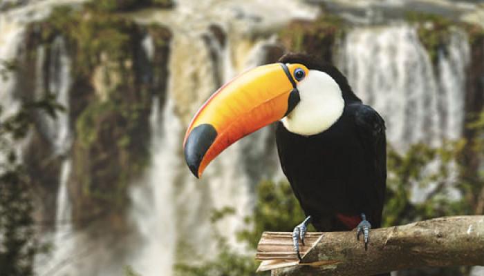 10 địa điểm dành cho những người yêu động vật